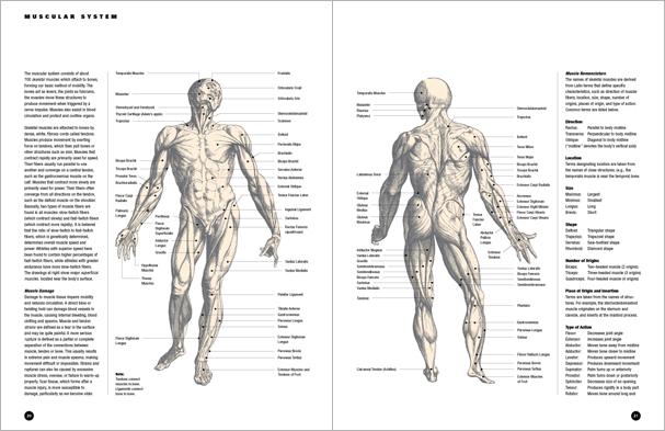 анатомия12