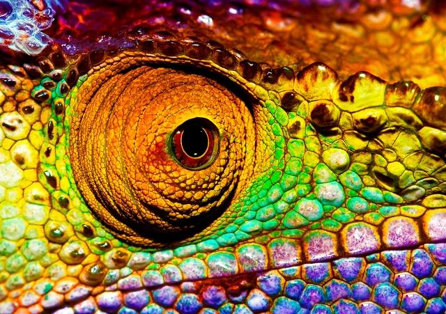 xameleon1